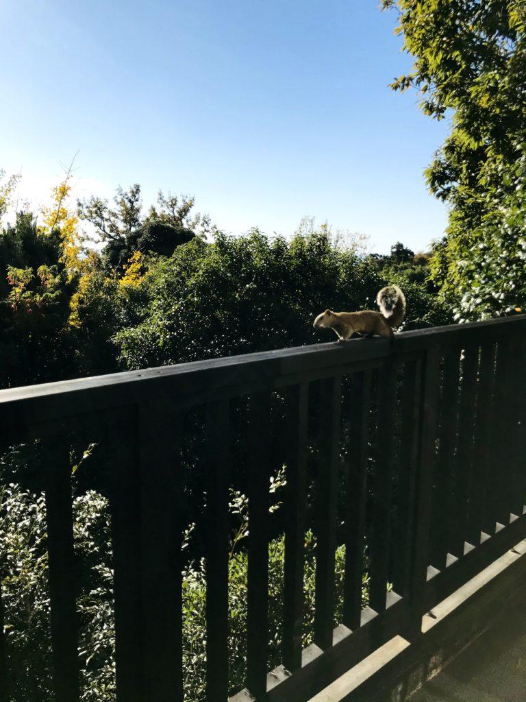 晴れた日にベランダを訪れたかわいいリス
